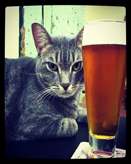 Our Belgian Strong Ale, named for our fearless brewery cat, Hoodie.